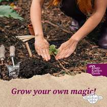 Winter Vegetable Plants (Organic) - Seed kit gift box #6