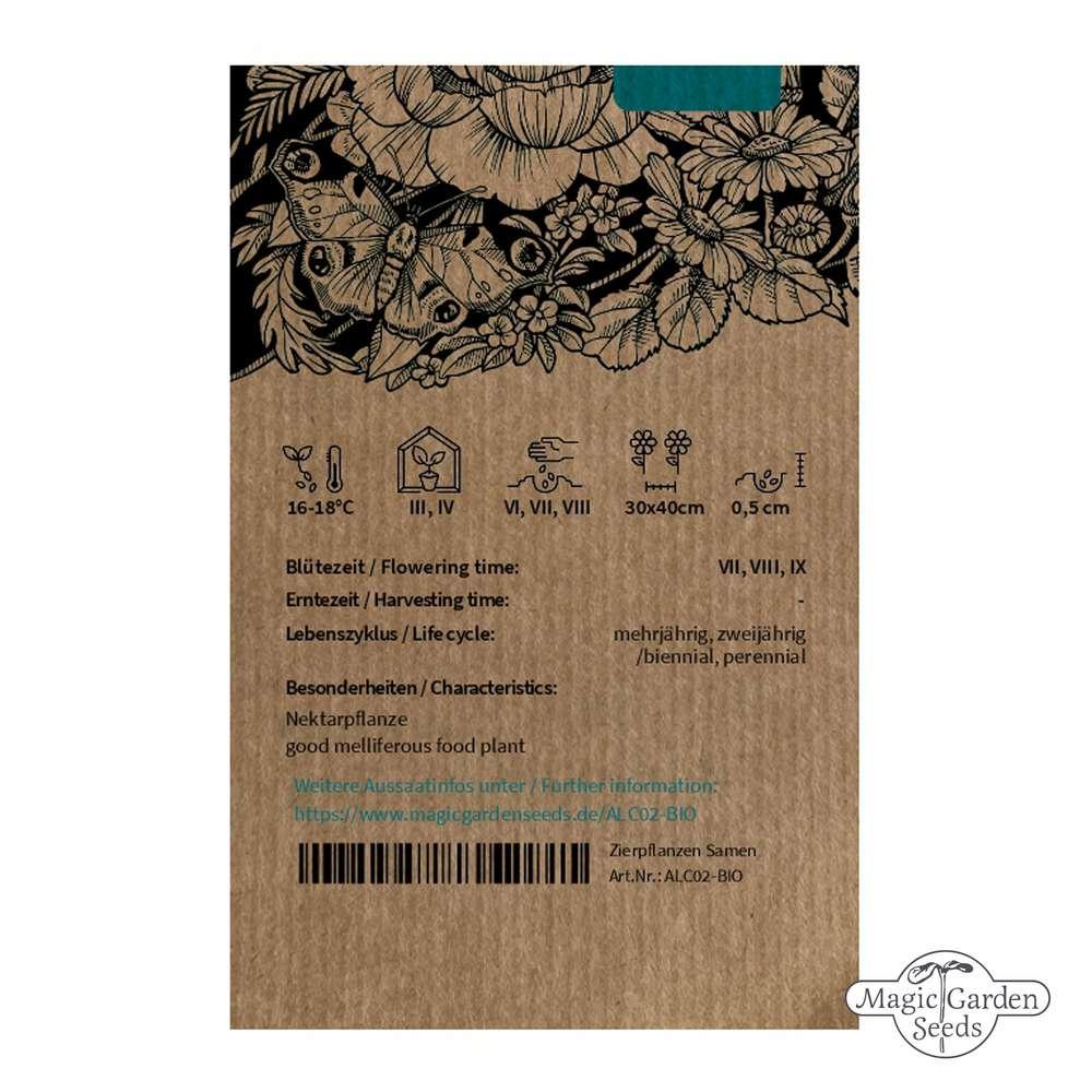 ** stockrose bauernrose Alcea rosea Mauve Foncé Rouge VIVACE 2 ans **